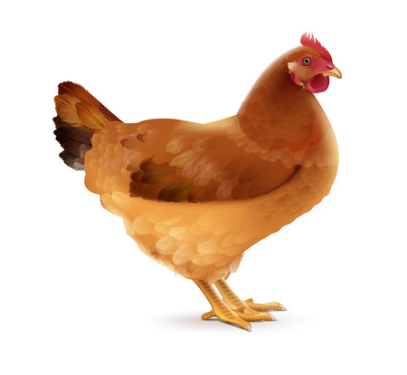 Vector illustration of brown hen right side view isolated on white background
