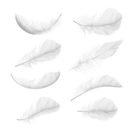 Conjunto de vector de plumas de aves realistas en varias posiciones y ángulos aislados sobre fondo blanco