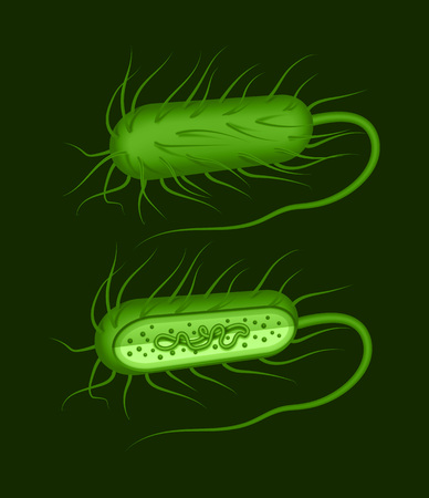 Vector illustration of green rod-shaped bacillus bacteria with fimbriae and flagellums isolated on dak background