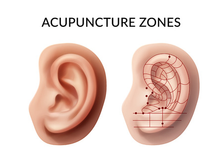 Vector illustration of ear with acupuncture points and reflex zones on white background Çizim