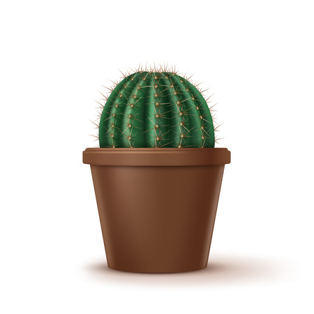 Vector illustration of big golden barrel cactus or Echinocactus grusonii growth in brown clay pot isolated on white background