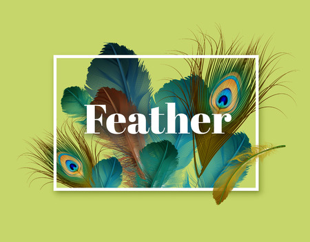 Vector illustration of exotic feathers template with space for text on light green background