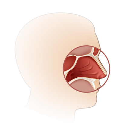 Vector human nasal cavity with head silhouette side view close up isolated on white background