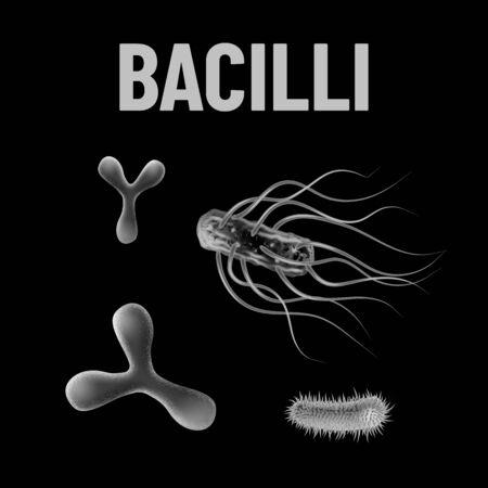 Bacilli bacteria monochrome vector illustration on black background. Virus concept Vettoriali