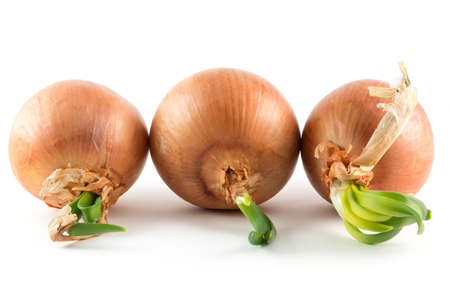 sprouted: A group of sprouted onions on a white background Stock Photo