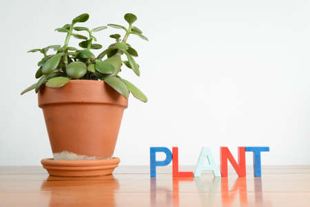 jade plant: A jade plant with the word plant spelled with magnet letters.