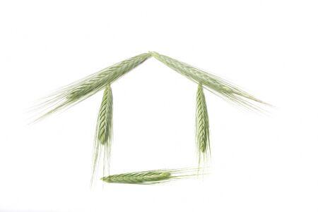 House made with barley photo