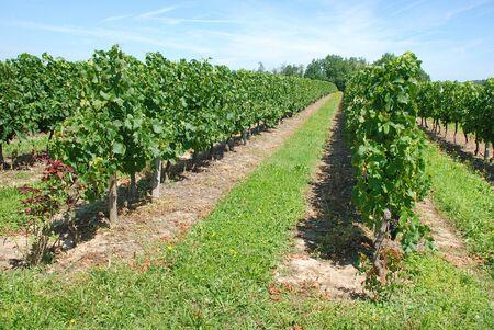 terroir: Vineyard in France