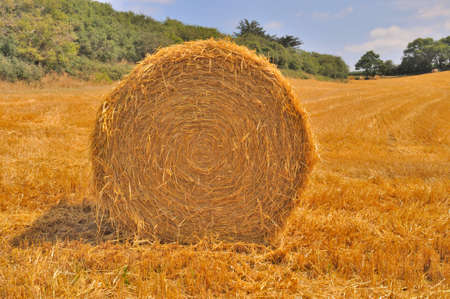 bucolic: Round straw bales in harvested fields Stock Photo