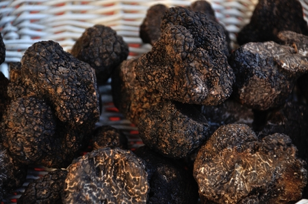 basic food: truffles Stock Photo