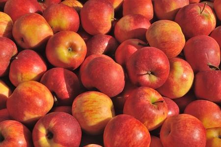 pommes: Pommes