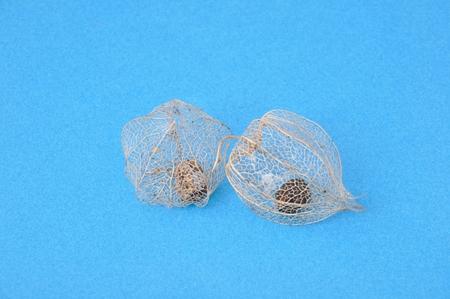 physalis: Dry physalis