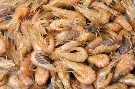 crustacea: Common Shrimp