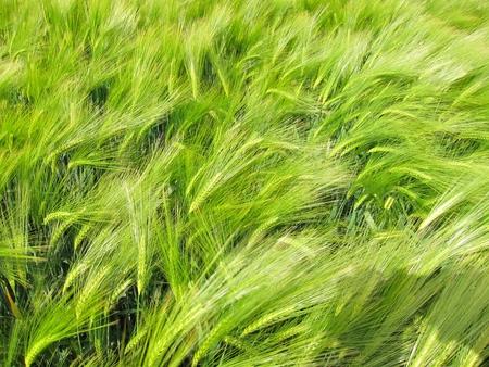 rurale: Green fields