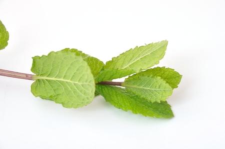 flavorings: Mint leaves