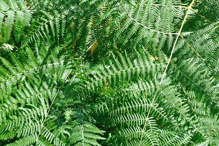 ferns: Green ferns Stock Photo