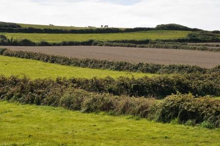 normandy: France, Normandy, Cotentin, landscape