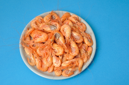 crustacea: prawn Shrimp Stock Photo