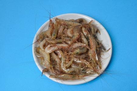 marine crustaceans: prawn Shrimp Stock Photo