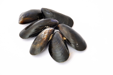 mussel: Mussel Stock Photo