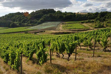 """Vineyard in France """"Coteaux du Layon"""" Banque d'images"""