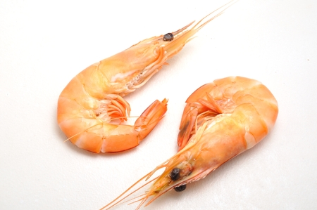 marine crustaceans: Tropical shrimp