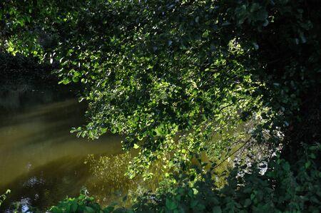 anjou: Layon river in Anjou