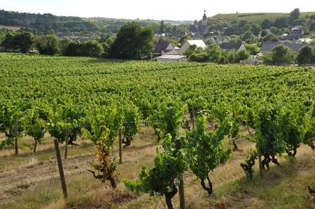 terroir: Vineyard in France  Coteaux du Layon  Stock Photo