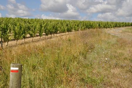 terroir: Vineyard in France  Coteaux du Layon  hiking trail Stock Photo