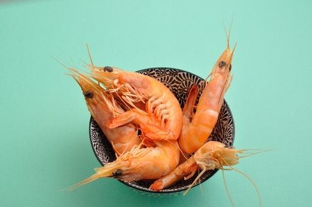 crustacea: Tropical shrimp