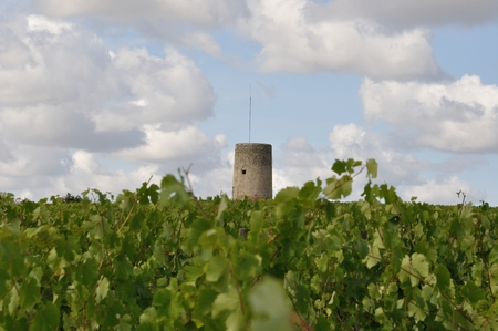 terroir: Vineyard in France  Coteaux du Layon  watch tower Stock Photo