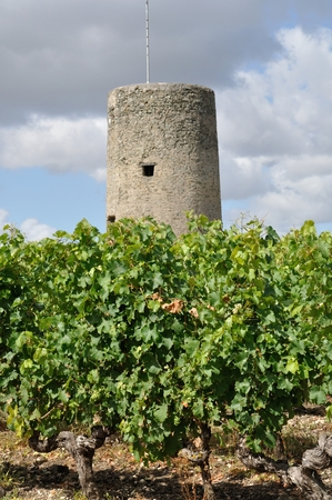 viniculture: Vineyard in France  Coteaux du Layon  watch tower Stock Photo