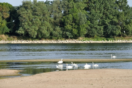 loire: Loire river in Anjou