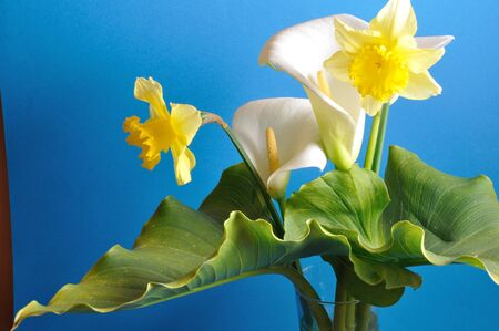 arum: Arum lilies and daffodils