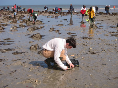 foreshore: PLERIN, FRANCE 21 MARCH, 2015: shell fishing on the foreshore at Martin beach