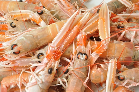 arthropods: Close-up of three scampi Stock Photo