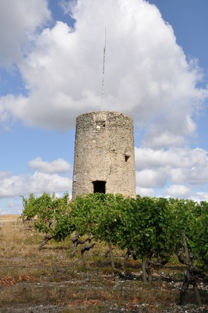 terroir: Vineyard in France  Coteaux du Layon  watch tower Editorial