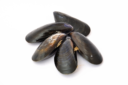 Mussels isolated on white background Imagens