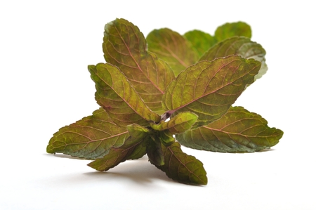 Pepper mint leaves Stock Photo
