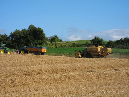 HILLION, FRANCE-AUGUST 13, 2017 in harvested field Hillion