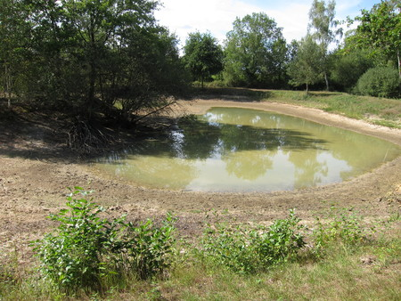 Dry pond, crackled earth Stock Photo
