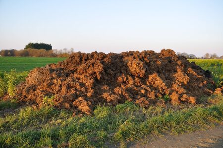 cow manure in a field
