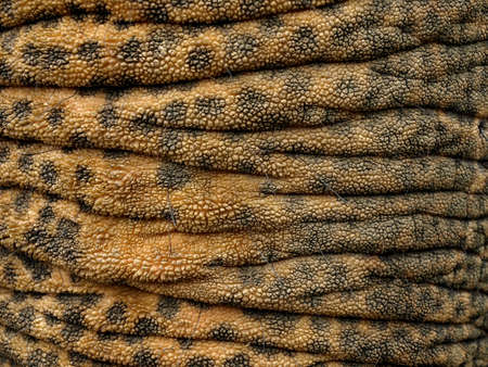 elephant trunk and skin texture