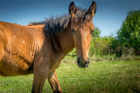 A young horse looks inquisitively at the camera