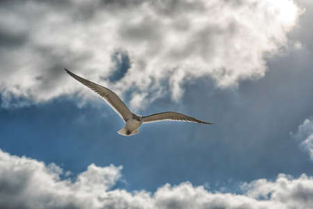 Flying seagulls in the blue sky close-up.