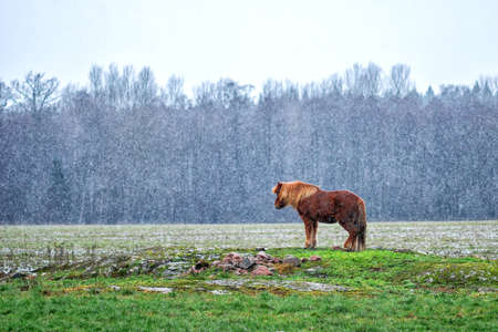 Lonely horse on the field at the snowy day