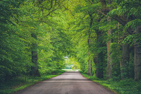 Trees arching over road with converging lines at the horizon of a long path through the woods. Green branches hanging over roadway in the woods create a natural tunnel through the forest.