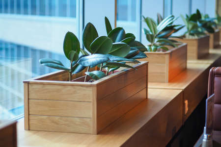 Image of A small wooden plant pot displayed in the window