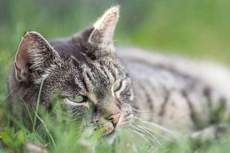 Funny Portrait of Happy Smiling Cat Gazing with opened Mouth and big eyes outdoors Imagens