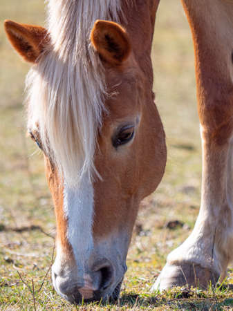 Detailed Image of young bwoen horse on the field